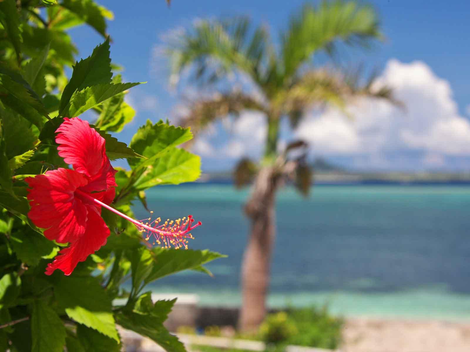サイバーテック沖縄サイトメイン画像